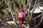 Climbing tree at the preschool